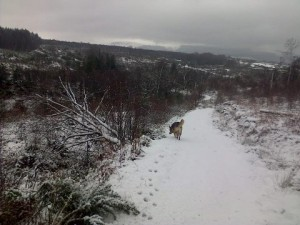 Roots of Arran Snow Feb 13